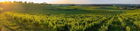 Photo for Sunset landscape bordeaux wineyard france, europe Nature - Royalty Free Image