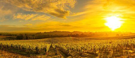 Photo pour Sunset landscape, Bordeaux wineyard, Langoiran, france - image libre de droit