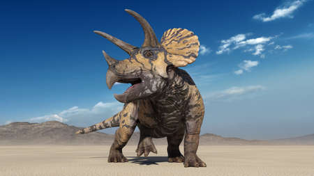Photo pour Triceratops, dinosaur reptile, prehistoric Jurassic animal roaring in deserted nature environment, front view, 3D illustration - image libre de droit