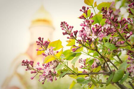Spring branch of lilac