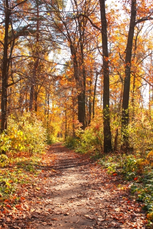 Beautiful landscape. Road in autumn forest