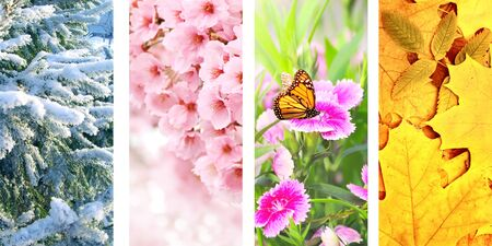 Photo pour Four seasons of year. Set of vertical nature banners with winter, spring, summer and autumn scenes - image libre de droit