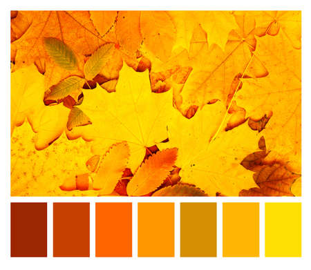 Photo pour Color matching palette with complimentary colour swatches. Autumn maple and rowan leaves of orange, green, red and yellow colors. Fall season color matching palette - image libre de droit