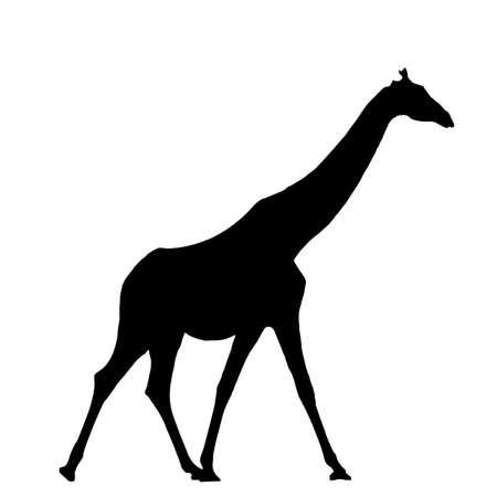 Giraffe, standing - Silhouette - digitally hand drawn Vector Illustration