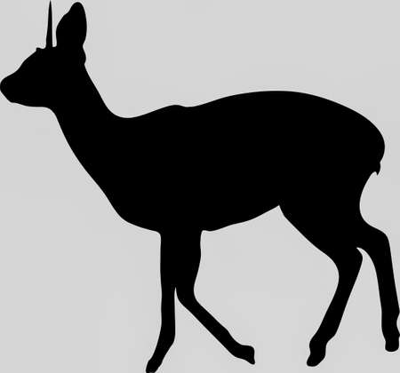 Hand drawn silhouette of a wild klipspringer antelope - Illustration, black isolated on white background