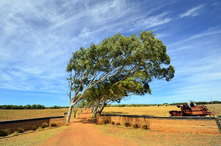 Australia, road to farm with wind schist trees