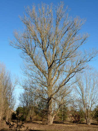 Tree in Phoeben, Brandenburg, Germany