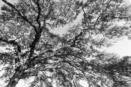 Photo pour Branches of a tree against the sky - image libre de droit