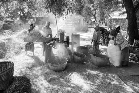 Photo pour BAGAN, MYANMAR, JANUARY 2018: Harvesting time in Bagan, Myanmar - image libre de droit