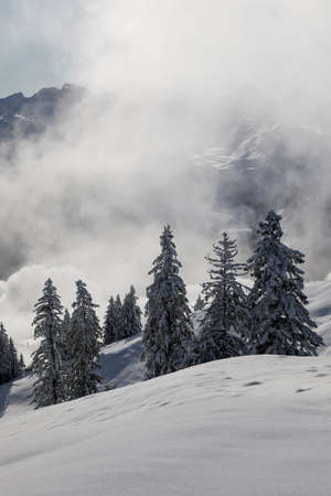 Photo pour Magical winter landscape with rising fog and the sun against the light in central Switzerland - image libre de droit