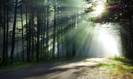 Magical forest in the morning sunlight rays  Bright rays of sunlight on the forest road  Slanting solar light through trees in the wood  Morning sun shining through the branches on the country road