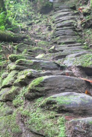 Stone stairs built by the Tayrona indigenous anmericans around 800AD  They lead to Ciudad Perdida  Lost City  archeological site in today s Tayrona National Park in Colombia  1200 such stairs lead up to Ciudad Perdida