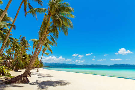 Photo for Beautiful landscape of tropical beach on Boracay island, Philippines. Coconut palm trees, sea, sailboat and white sand. Nature view. Summer vacation concept. - Royalty Free Image