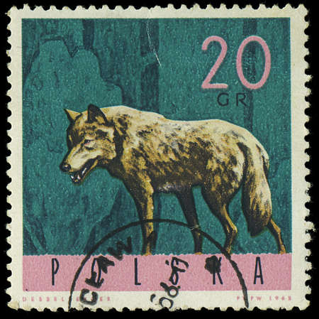 POLAND - CIRCA 1965  A stamp printed in Poland from the  Forest Animals  issue shows a wolf, circa 1965