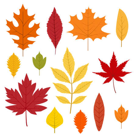 Illustration pour Autumn leaves collection. Colorful leafs in cartoon style. Isolated vector illustration on white background. - image libre de droit