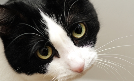 A Cute black and white cat with sad yellow eyes