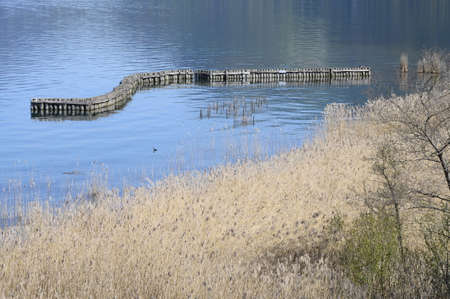 Wooden poles, water and reed bed on Annecy lake