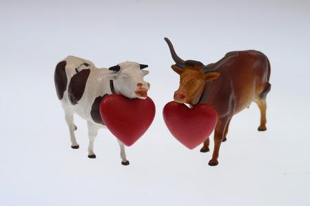 Photo pour Cow and red heart for valentine animal - image libre de droit