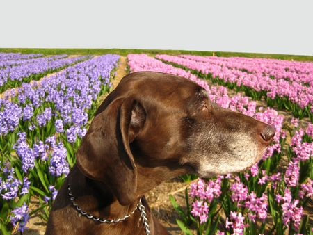 pointer in the field