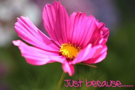 Photo pour Just because greeting card Pink flower - Print and post - image libre de droit