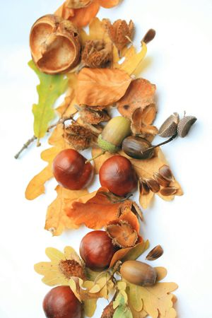 Autumn symbols, leaves, chestnuts and acorns, perfect as a border or background