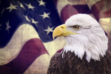 Bald eagle with the american flag out of focus and grunge look