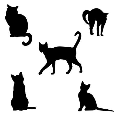 Photo pour Set of cats silhouettes. Black contours of different cats on a white background. Isolated. Kittens . Vector illustration - image libre de droit