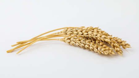 Foto für Spikelets and wheat grains on a white background - Lizenzfreies Bild