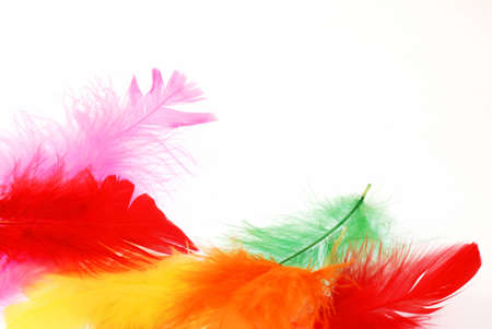 Beautiful soft feathers of various colors create merry background