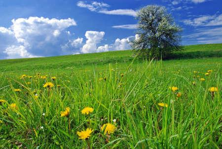 Foto de Beautiful spring landscape with tree in bloom and meadow full of dandelions - Imagen libre de derechos