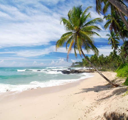 Tropical paradise in Sri Lanka Tangalle with palms hanging over the beach and turquoise sea