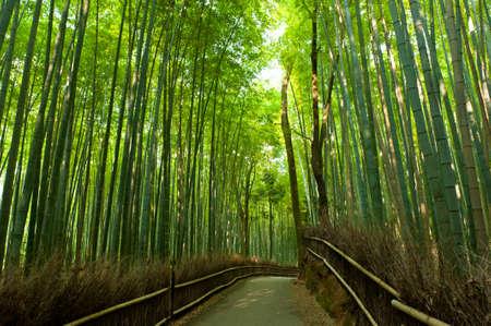 Famous bamboo grove at Arash