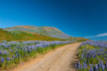 Meadows full of blooming Noo