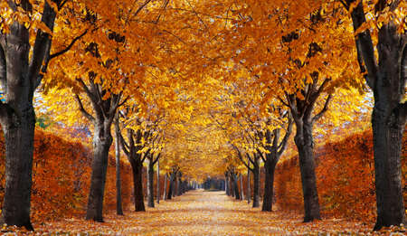 Foto per Autumn alley - Immagine Royalty Free