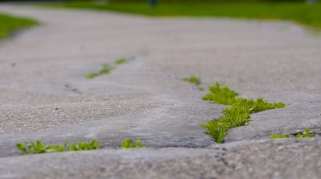 a paved walking trail with a close up of the pavement and grass growing through the cracks and the trail blurred in the distance