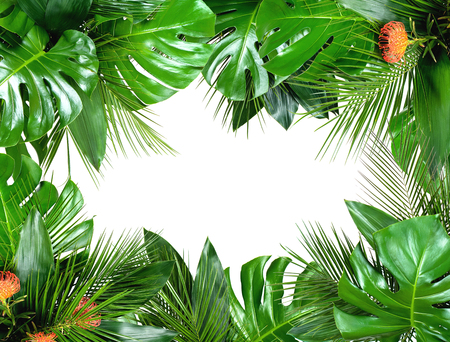 Photo pour Close up of bouquets of various fresh tropical leaves isolated on white background. Design template. Frame with copy space for text. Top view, flat lay - image libre de droit