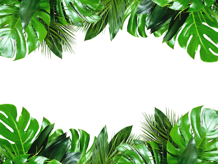 Photo for Close up of bouquets of various green fresh tropical leaves isolated on white background with clipping path. Design template. Frame with copy space for text. - Royalty Free Image