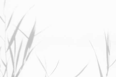 Photo pour Overlay effect for photo. Blurred gray shadows of delicate grass on a white wall. Abstract neutral nature concept background. Space for text. Shadow for natural light effects. - image libre de droit