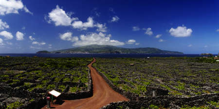Red trail among Vineyard, Pico island, Azores, Portugal