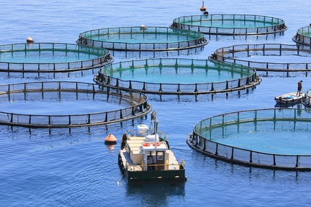 Photo for Fish farm - Royalty Free Image