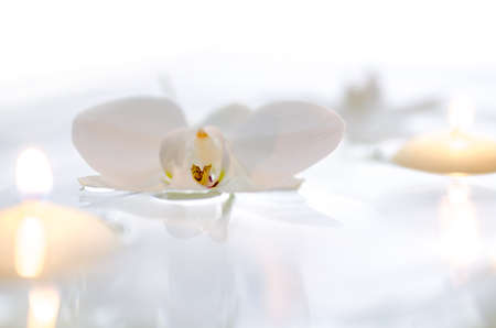 Orchid flower and candles floating on the water  With white background
