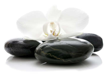 Orchid flower on top of basalt zen stones  Isolated over white background