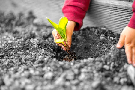 Colored hands of a child with red sleeves planting a small plant with green leaves in contrast with the grey polluted soil and environment.