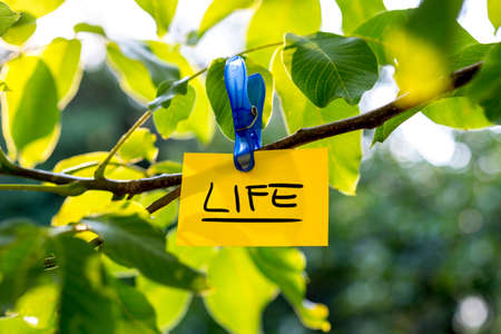 Beautiful vivacious life concept - yellow paper with LIFE sign hanging from a green tree.