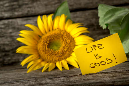 Yellow card with a Life is good message leaning on a beautiful blooming sunflower over textured rustic background.