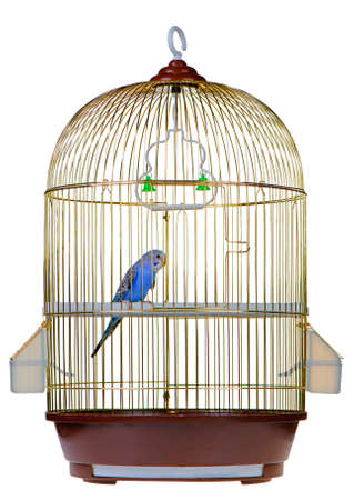 Photo for Parrot in cage. It is isolated on a white background. - Royalty Free Image