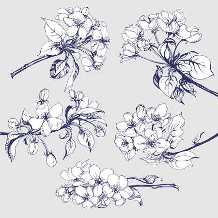 Illustration pour Flower set: Sketch of blossoming Apple tree branch. element for your design. Vector illustration - image libre de droit