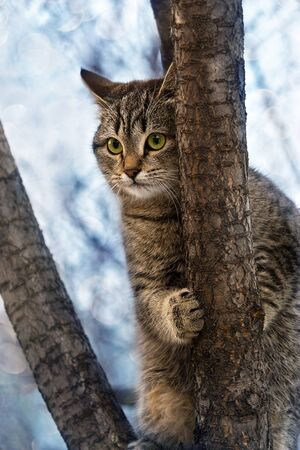 Domestic cat climbed a tree and does not want to go down.