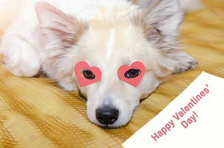Photo for A dog with hearts in its eyes is lying on a blanket. Valentine's day greetings on paper - Royalty Free Image