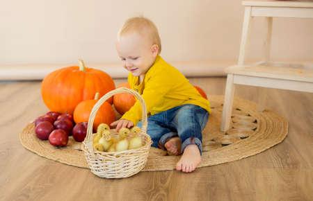 Photo pour A little boy sits among pumpkins with a basket of ducklings. - image libre de droit